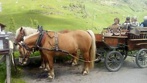 Pferdekutsche in Lazins